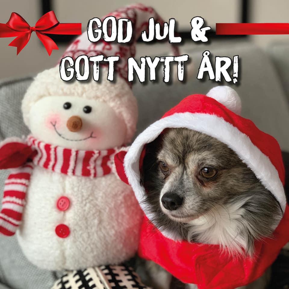 God Jul önskar kontorshunden Alfonz!